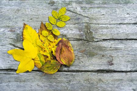Autumn leaves background Foto de archivo - 119609567