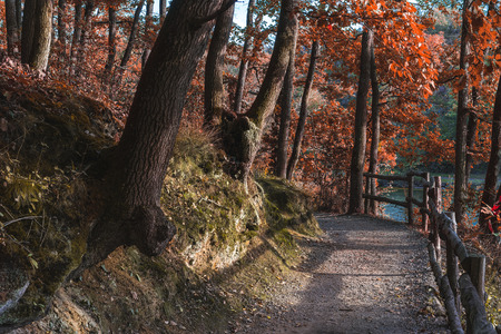 Autumn scenery Stok Fotoğraf