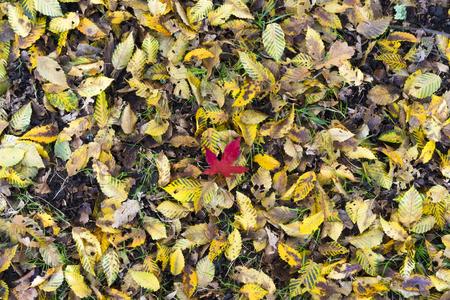 Autumn leaves Foto de archivo - 119609464