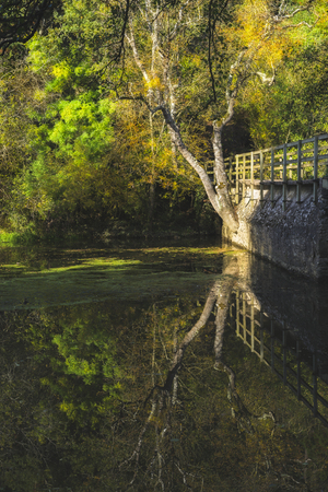Autumn reflecting tree