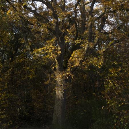 Tall tree with orange leaves. Foto de archivo - 119609471