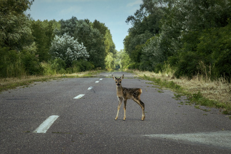 Little deer fawn in the middle of the road
