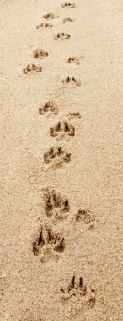 Dog footprints step on the beach Фото со стока