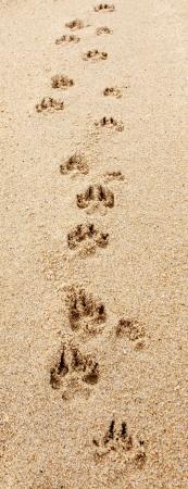 huellas de perro: Huellas de perro pisar la playa