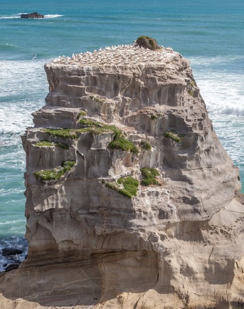 Rock with Gannet Colony in Muriwai Beach on The West Coast of The North Island, Auckland, New Zealand Stock fotó