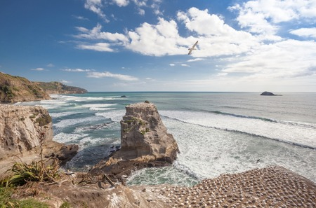 Muriwai Beach and gannet colony on The West Coast of The North Island, Auckland, New Zealand photo