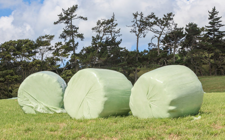 shrink wrapped: Bales of silage wrapped in white plastic at the green field in summer New Zealand.