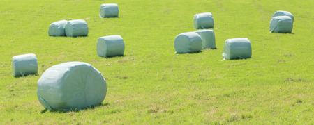 shrink wrapped: Bales of silage wrapped in white plastic at the green field in summer, in countryside New Zealand. Stock Photo