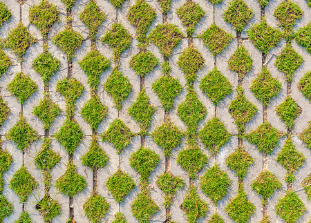 pattern: Green field background in textured concrete on pathway.