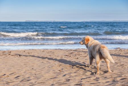 The dog is on a sandy beach overlooking tropical beach.