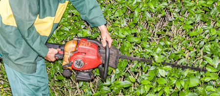 electric trimmer: Close up the Gardener use hedge trimmer machine for gardening. Stock Photo