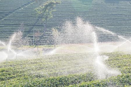 water sprinkler: Water sprinkler in green tea plantations.