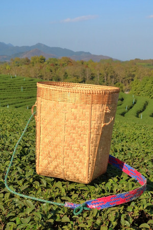 picker: Tea wooden picker basket over the bushes in tea plantations. Stock Photo