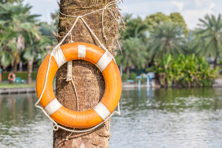 safety buoy: Orange life buoy is hanging in national green park, safety and security concept.