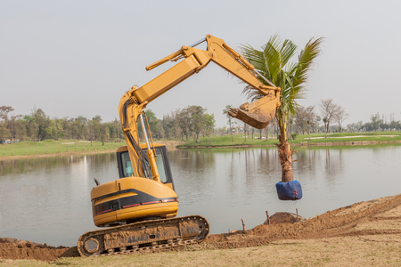Tree planting, new palm tree is lifted by forklift and preparing for planting.