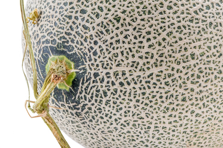 Close up the top of Hamigua melon (sweet cantaloupe melon) isolated on white background.