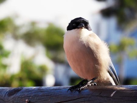 Bird watching in huelva