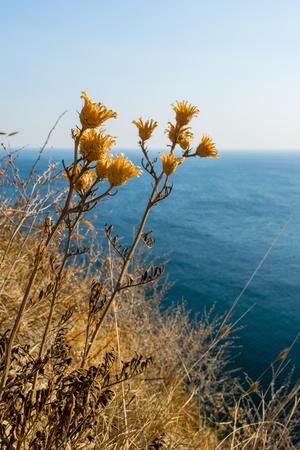 krasnodar: Beautiful view of the Black sea. Near the Village Durso. Krasnodar region. Russia.