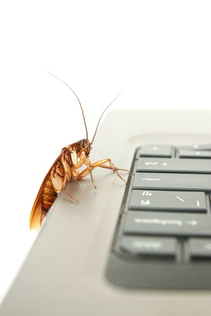 detestable: Cockroach climbing on keyboard to present about computer attacked from virus