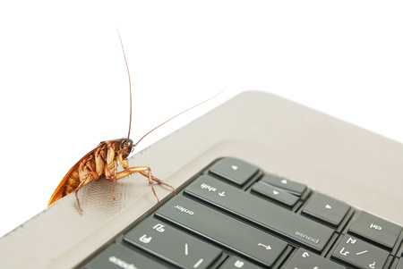 Cockroach climbing on keyboard to present about computer attacked from virus