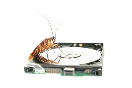 atacaba: Cucaracha escalada en la unidad de disco duro para presentar sobre el equipo atacado por virus Foto de archivo