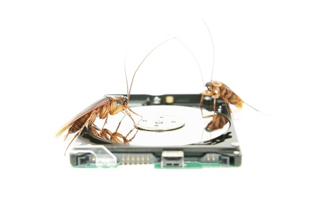 Cockroaches climbing on hard disk drive to present about computer attacked from virus Stock Photo