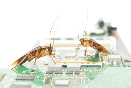 internet attack: Cockroaches climbing on circuit board to present about computer attacked from virus Stock Photo
