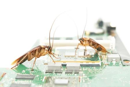 atacaba: Las cucarachas suben en la tarjeta de circuitos para presentar sobre el equipo atacado de virus