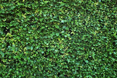 A Hedge Background