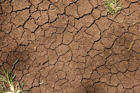 Background image of cracked earth texture with plants photo