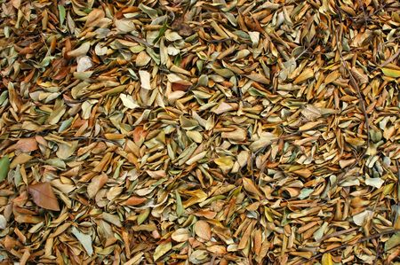 Textura de fondo abstracto de hojas caídos en un piso de la selva  Foto de archivo