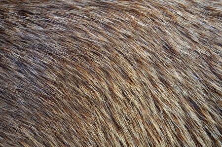 Abstract Background Texture Closeup Of Animal Fur
