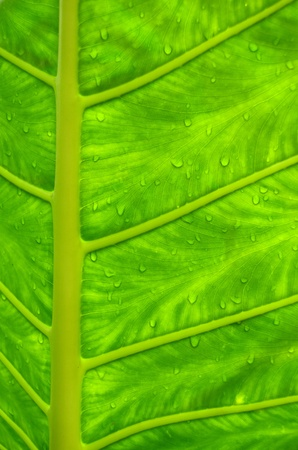 Water Drops On A Leaf In A Tropical Rainforest Banco de Imagens