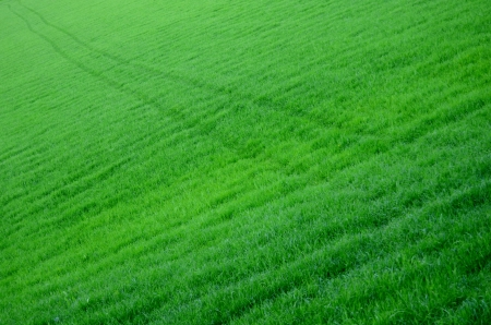 Diagonal Tracks Through A Lush Green Field Of Grass Stock Photo - 13920844