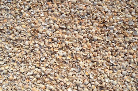 An Abstract Background Texture Of Sea Shells photo