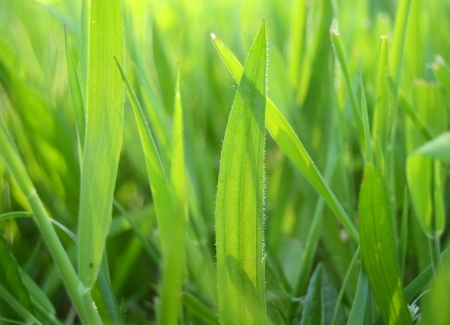 Sunlight Shining Through Long, Lush Summer Grass