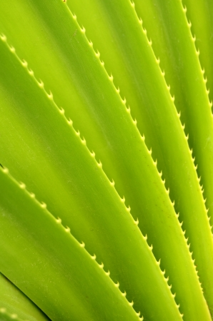 Abstract Background Texture Of Tropical Plant Stock Photo