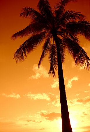 A Palm Tree Set Against A Hawaiian Sunset photo