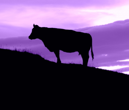 Silhouette Of A Cow On A HIll With A Purple Sky With Copy Space photo