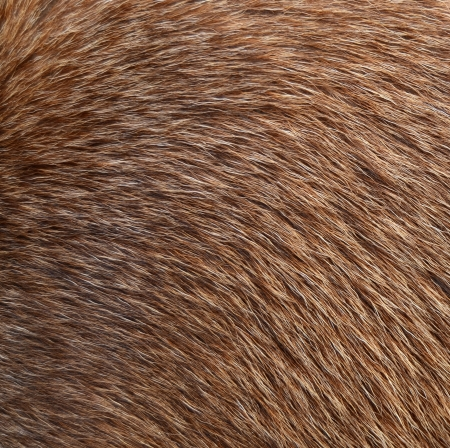 pelage: Abstract Background Texture Closeup Of Animal Fur