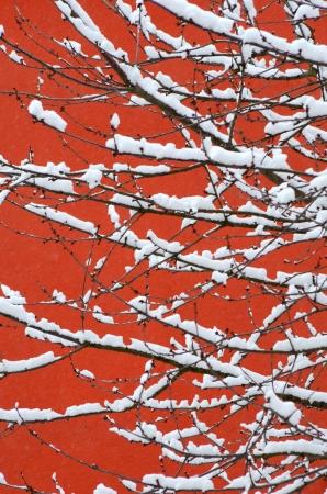 freshly fallen snow: Seasonal Image Of Snowy Tree Branches Against Orange Wall