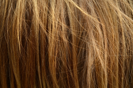messy hair: Abstract Background Texture Of Messy Coarse Animal Hair Stock Photo