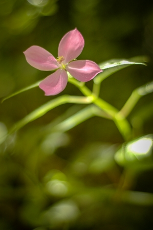Close-up Of A Wild Rose With Shallow Depth Of Focus photo