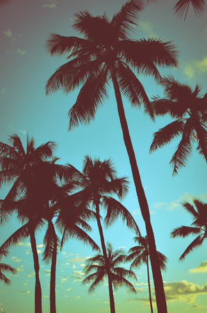 Filtered Vintage Retro Styled Palm Trees In Hawaii
