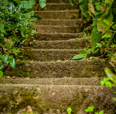 climbing plant: Conceptual Image Of Steps In WIld Garden Leading Upwards  Shallow DoF  Stock Photo