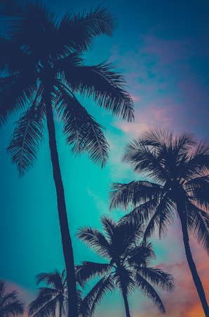 Retro Filtered Photo Of Hawaii Palm Trees At Sunset