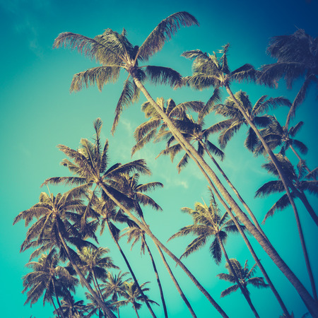 Retro Vintage Style Photo Of Diagonal Palm Trees In Hawaii