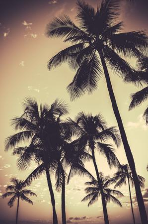 Retro Filtered Sepia Tropical Palm Trees