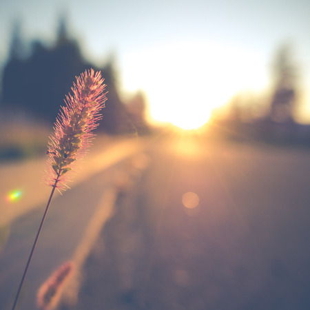 Retro Vintage Soft Focus Empty Street With Grass And Lens Flare