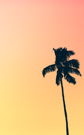 grunge tree: Illustration Of Retro Style Single Palm Tree Against Muted Pastel Colored Tropical Red And Orange Sunset Stock Photo